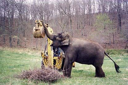 elephantbackhoe.jpg
